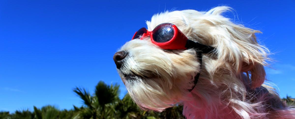 Lunettes pour chien Doggles rouge